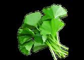 Rau má trồng sạch (lá lớn)
