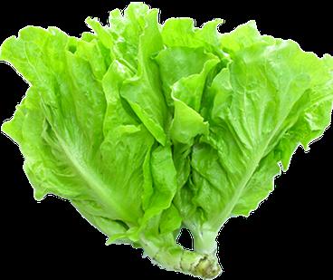 Salad lụa