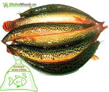 Cá sống