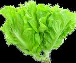 Rau xà lách (salad lụa)