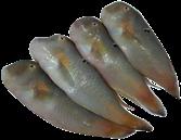 Cá mó tươi (size đặc biệt)