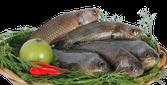 Cá Rô nuôi sống (đầu tròn)